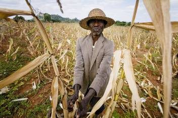 An older farmer with his crops in Zimbabwe. (c) Kate Holt/HelpAge International