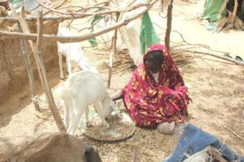 Dalama, who is 75, with her two goats. (c) Shakir Yahia/helpAge International
