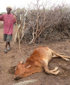 An older man stands by his dying livestock.