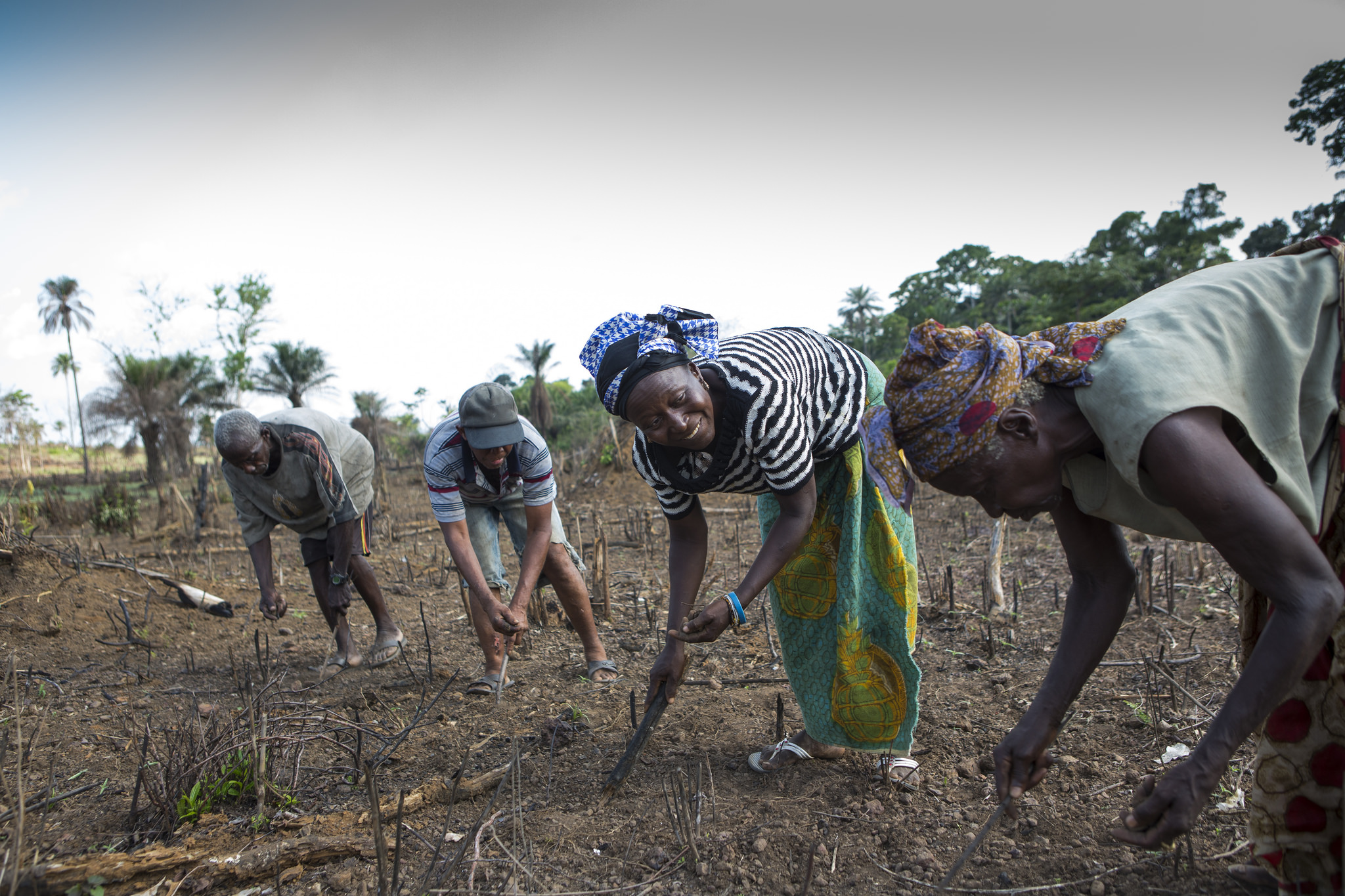 The Gendenmawa OPA has invested in a community groundnut farm (c) Simon Rawles/Age International
