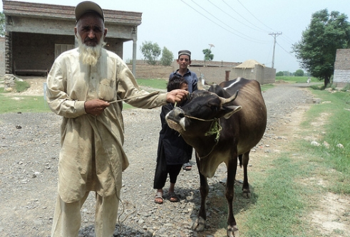 Gula Jan, 82 lost his cows and buffaloes in the floods. We gave him a loan so he could buy a cow and earn an income again.