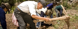 Older Latin Americans at work. (c) Antonio Olmos/HelpAge International.