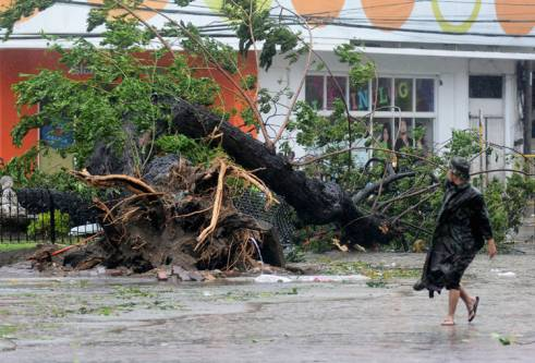 A man walks past a tree uprooted by strong winds brought by super Typhoon Haiyan.