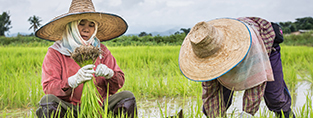 Working on the fields in Thailand (c) Robin Wyatt/HelpAge International